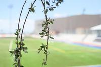Osas FC vs Alces FC