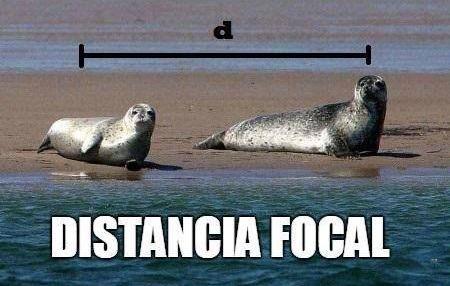 distancia_focal_meme.jpg